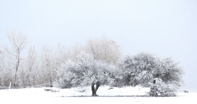 snowfall-SW Colorado - tessjohnstone   ello