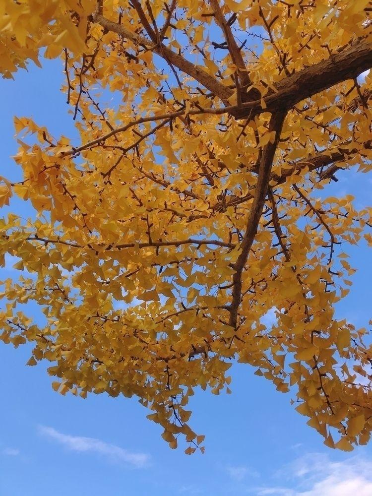 sky, autumn - mamimumemami   ello