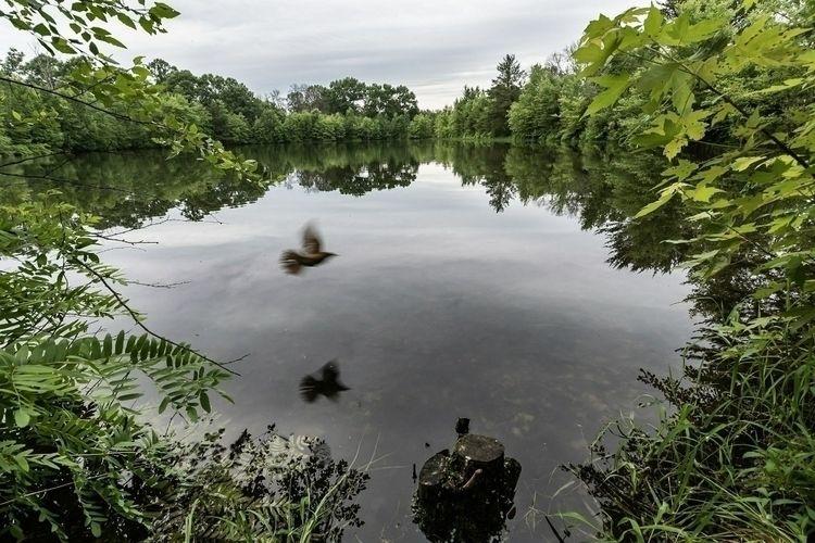Escape! Pond, Buckhorn State Pa - netagra | ello