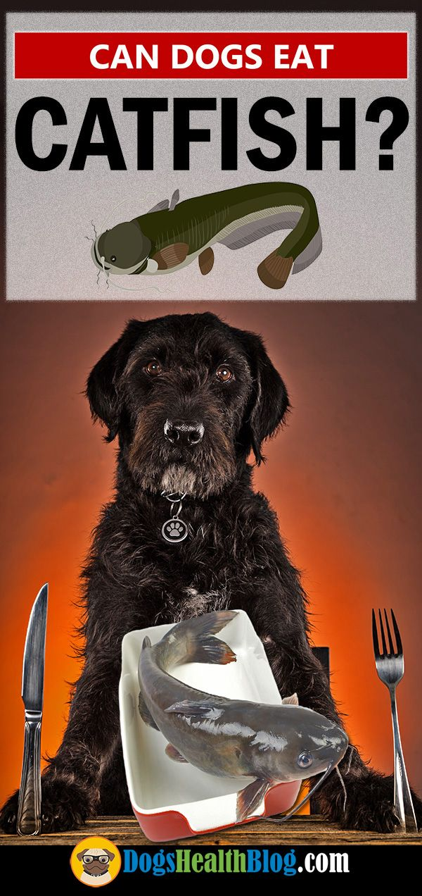 Source: Dogs Eat Catfish - dog, dogs - dogshealth | ello