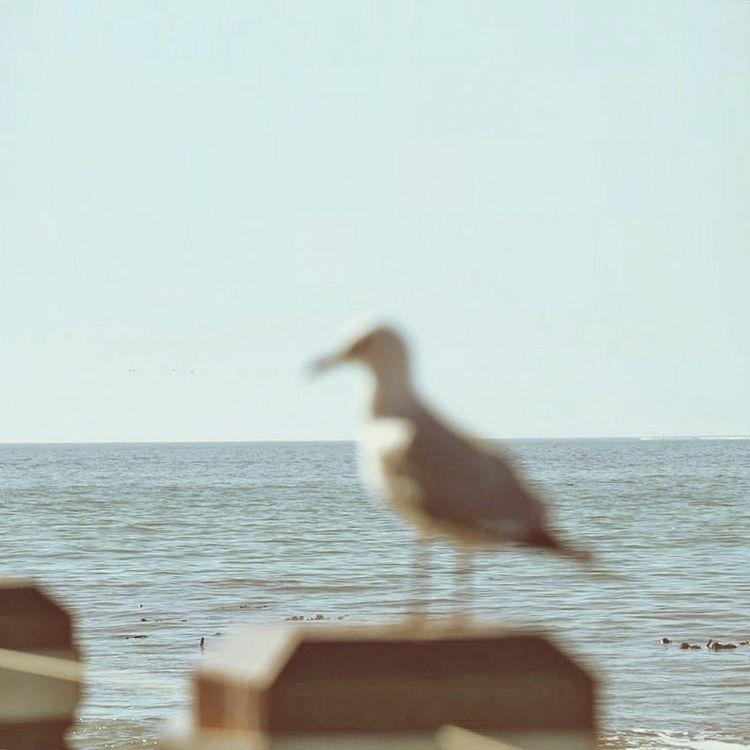 Birds eye view - artofvisuals - kunelgaur | ello