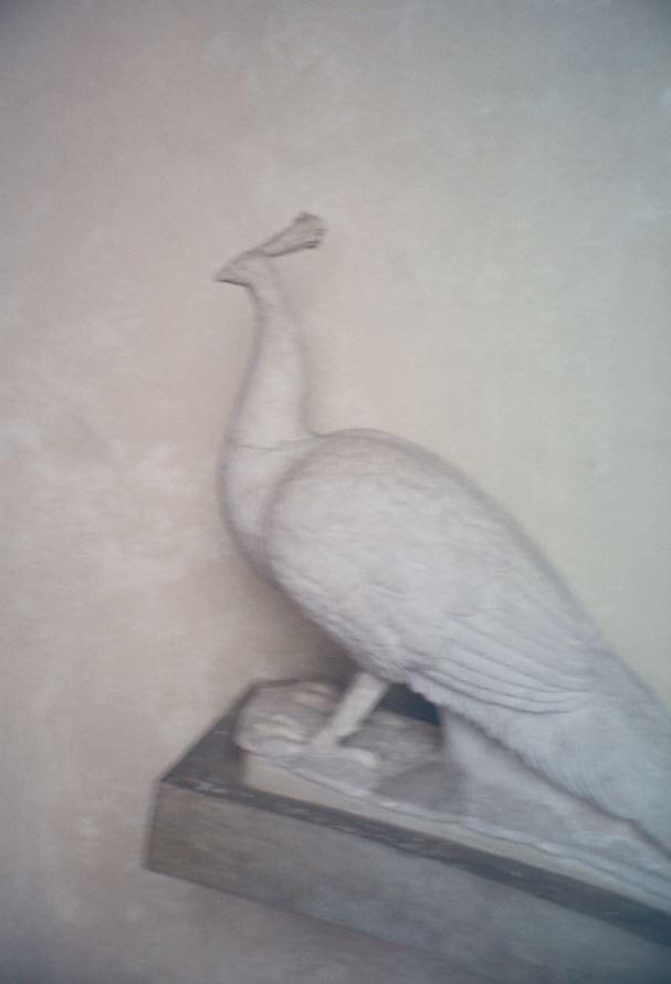 Peacock / Museo Nazionale del B - alfredagostinelli | ello