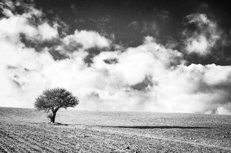 Lonely tree - blackandwhitephotography - gavinobazzoni | ello