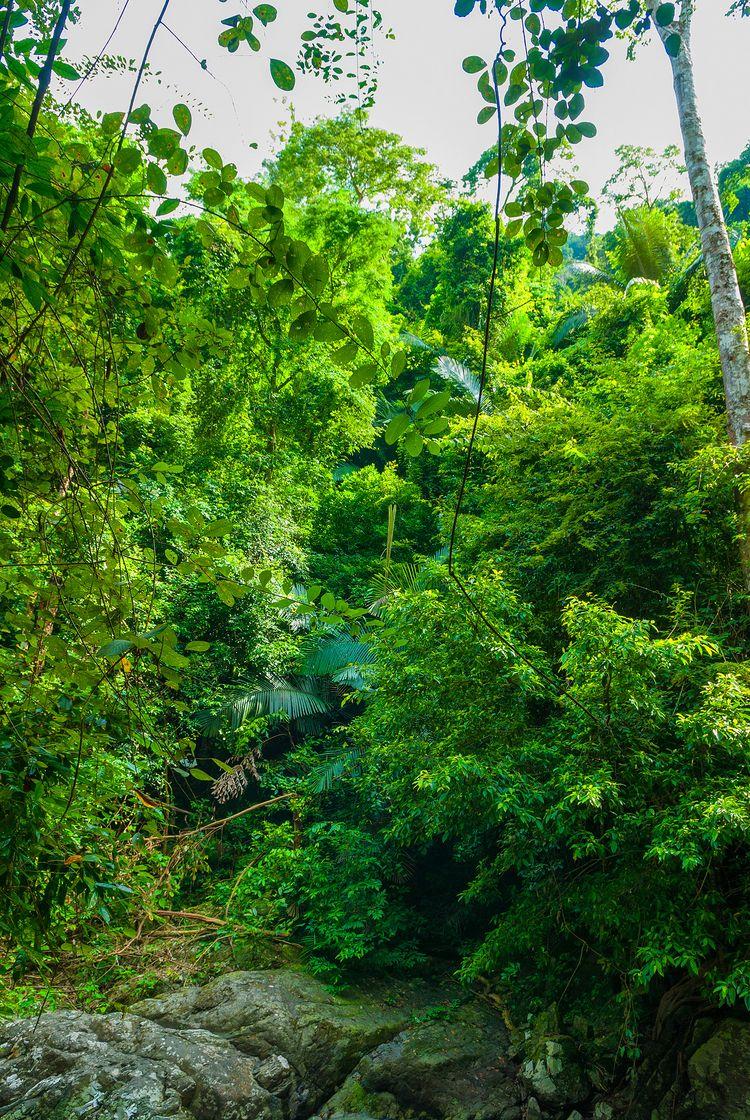 find jungle path Krachan - Kaeng - christofkessemeier   ello