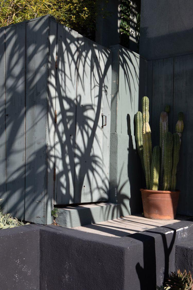 Plant Shadows, Micheltorena St - odouglas | ello