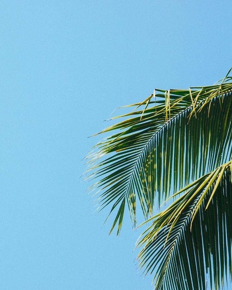 beach, perspective - timtimo   ello