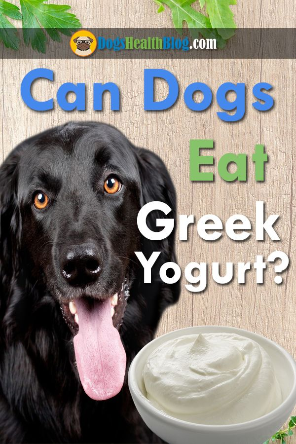 Source: Dogs Eat Greek Yogurt - dog - dogshealth | ello