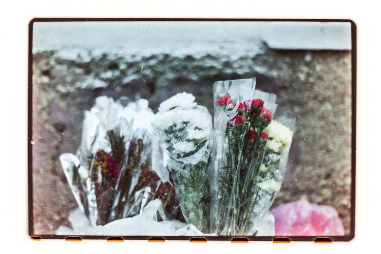Dead flowers - frozenflowers, flowermarket - odoljen   ello