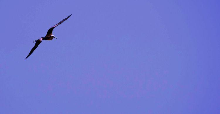 El vuelo - photography, Ecuador - johnnychunga | ello