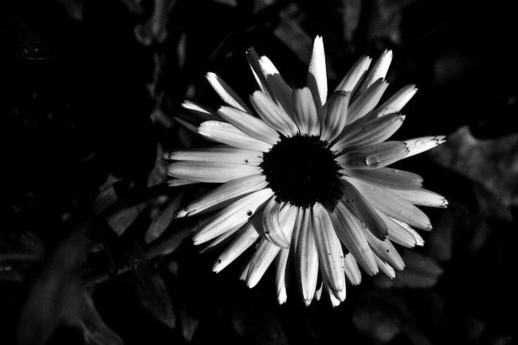 Botanical Monochrome 5799 - flowerphotography - dorian-stretton | ello