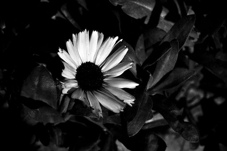 Botanical Monochrome 5801 - flowerphotography - dorian-stretton | ello
