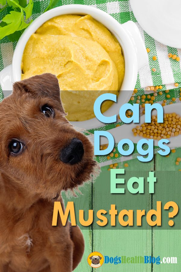 Source: Dogs Eat Mustard - dog, dogs - dogshealth | ello