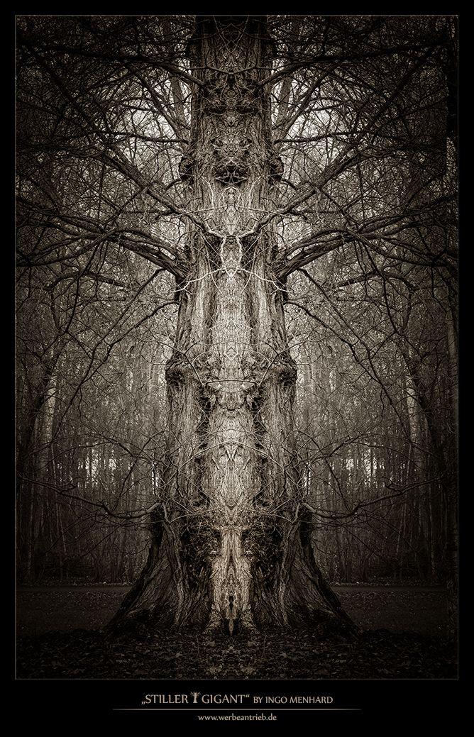 Silent giant / Stiller Gigant - photo - ingomenhard | ello