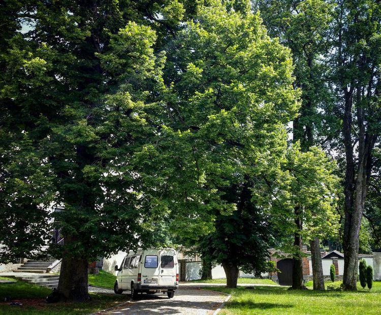 ZDAR NAD SAZAVOU TREES Walking  - dalgorozpe   ello