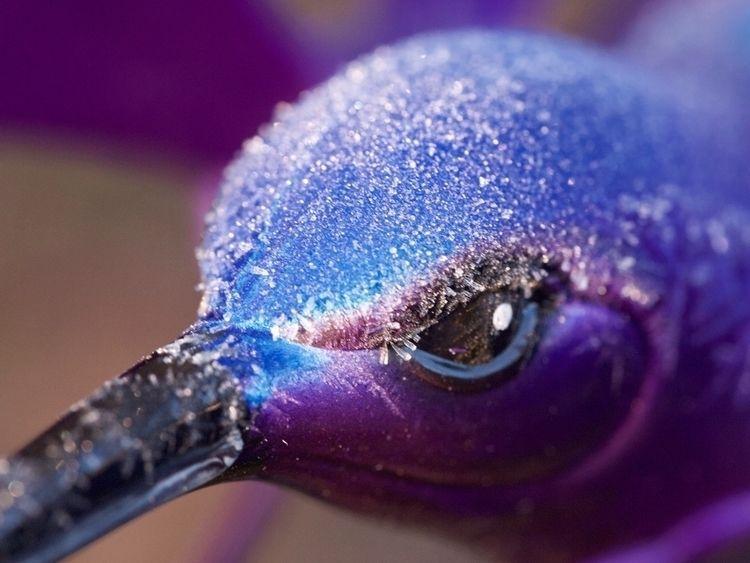 icy 🥶 bird - joycomplex | ello