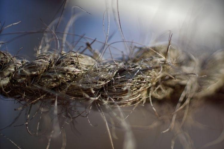 Worm Ropeflower - photography, structure - marcushammerschmitt | ello