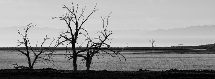 dead trees, Calipatria, Califor - frankfosterphotography | ello