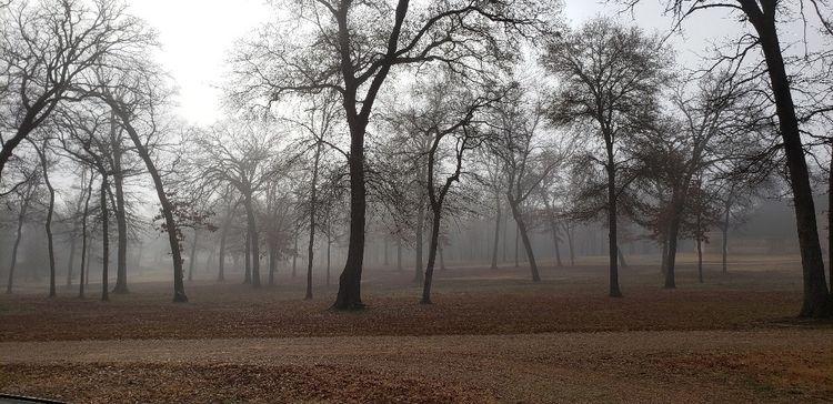 foggy mornings home - prdfldvn   ello