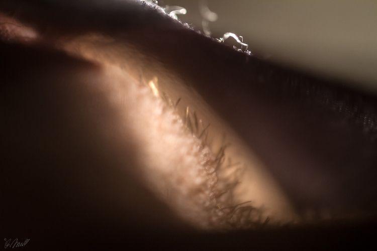fur, glimpse, pantyhose, sensual - andreasfriedl   ello