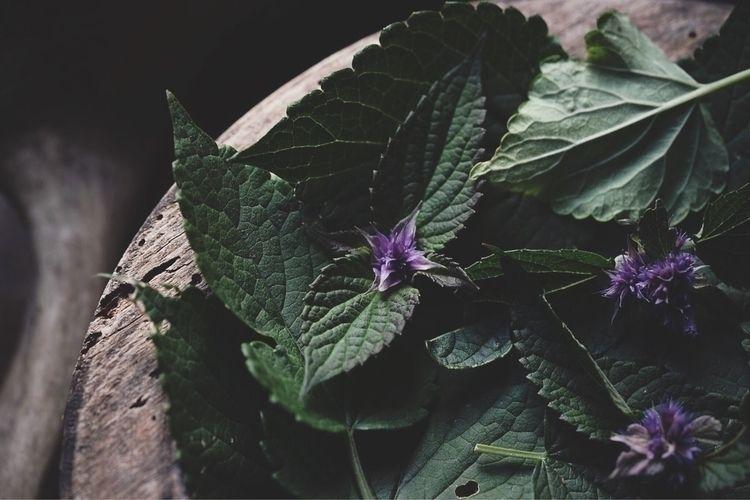 Midsummer gatherings flavour-fi - spiritwoods   ello
