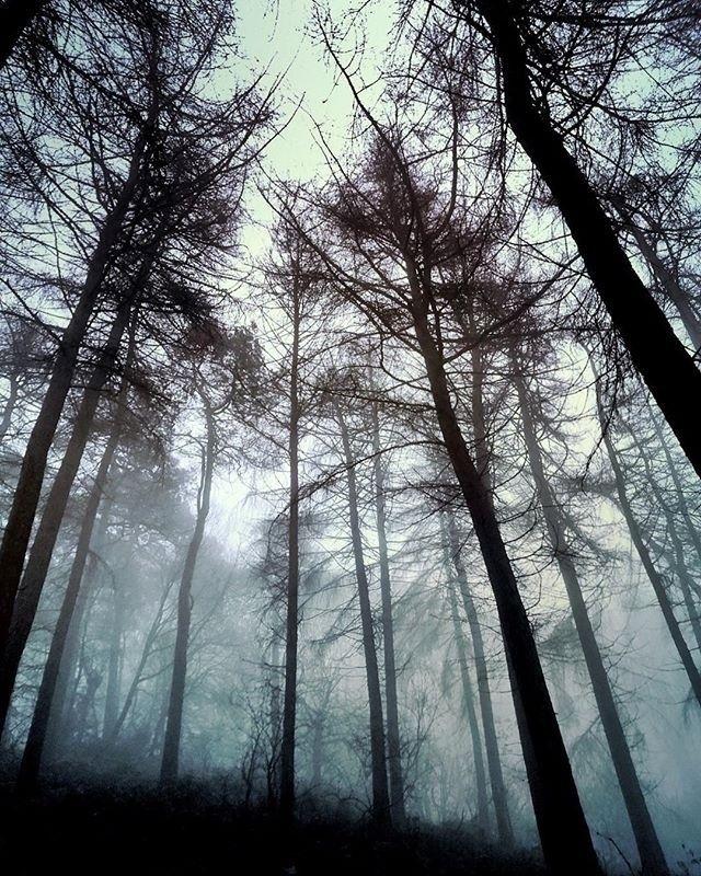 Dark Trees - Iphone, iphoneography - itsrichardjohnson | ello