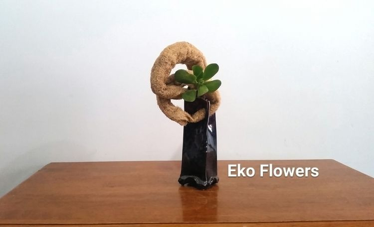 Eternal Soul - Luffa, succulent - ekoflowers | ello