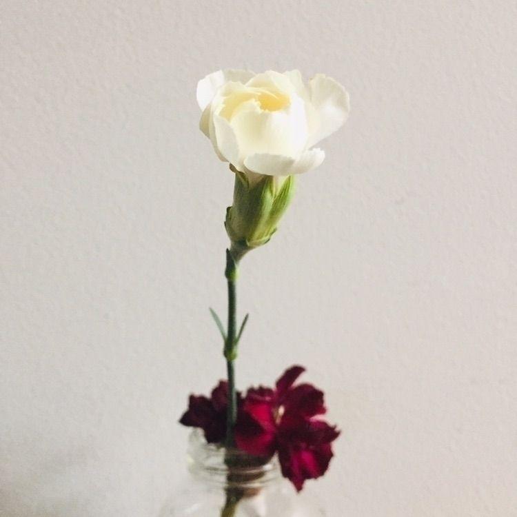 flora, fleurs, flowers, carnations - djubdju | ello