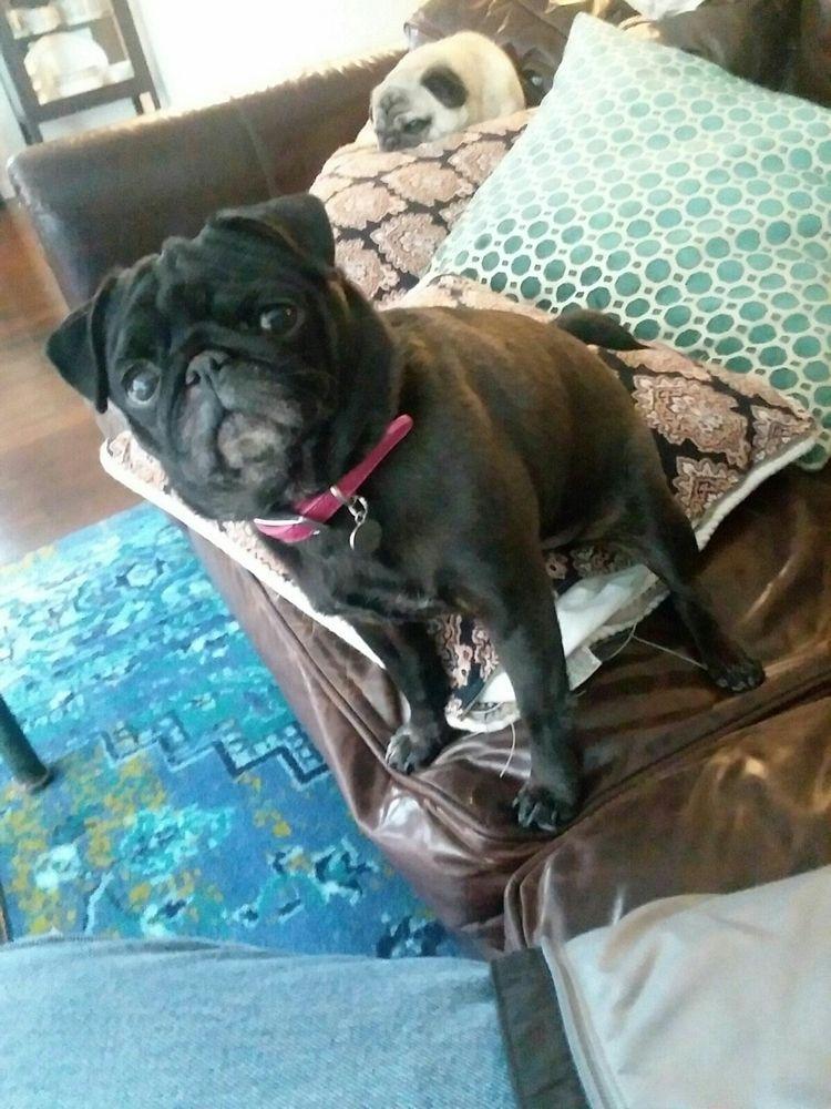 Ellie - beerdog1234   ello