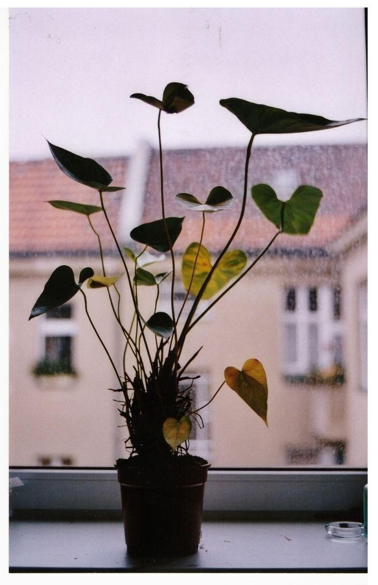 plant - day1 | ello