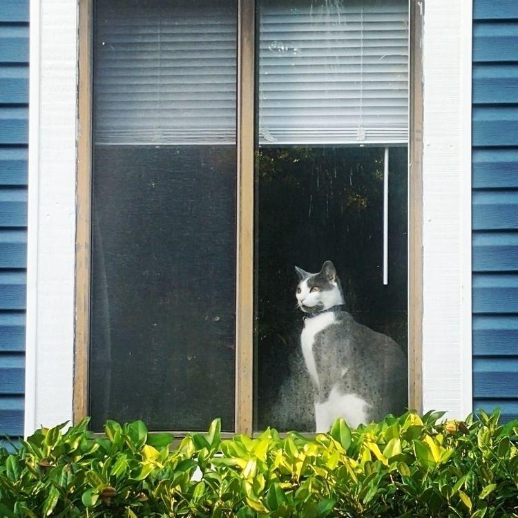 Haldol, magnificent - cat, nature - anistie | ello