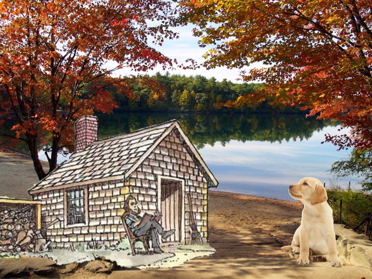 Walden Pond. Thoreau hung Event - ccruzme | ello