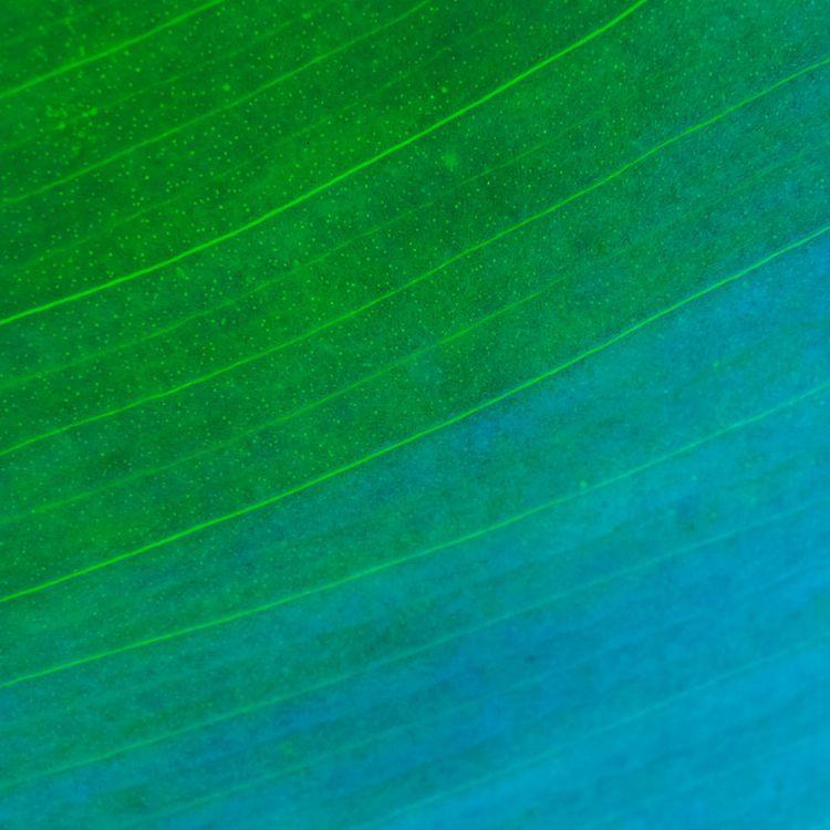 Blue green - leaves, botanical, color - andreigrigorev | ello