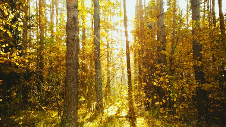 forest, lithuania, october, landscape - beheroght   ello