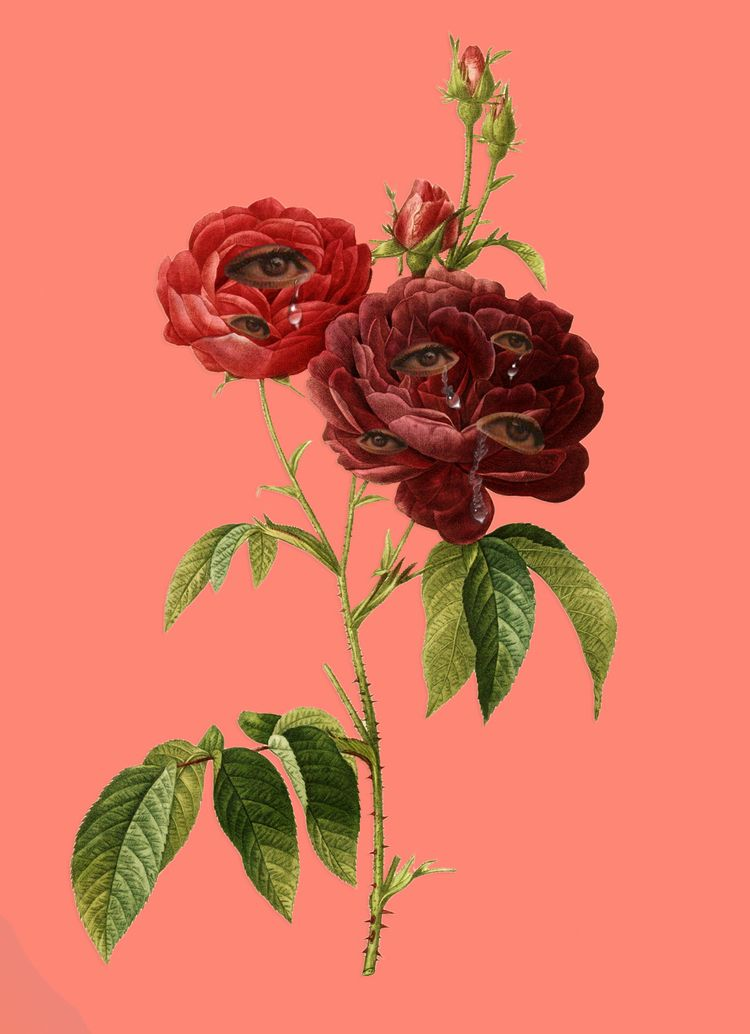 rose - sickbbbb | ello