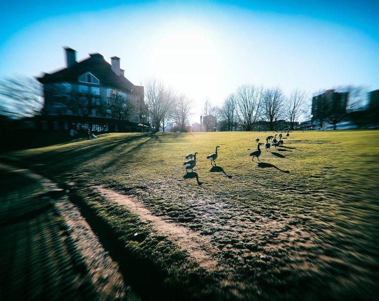 winter geese - color, photography - brenthirak | ello
