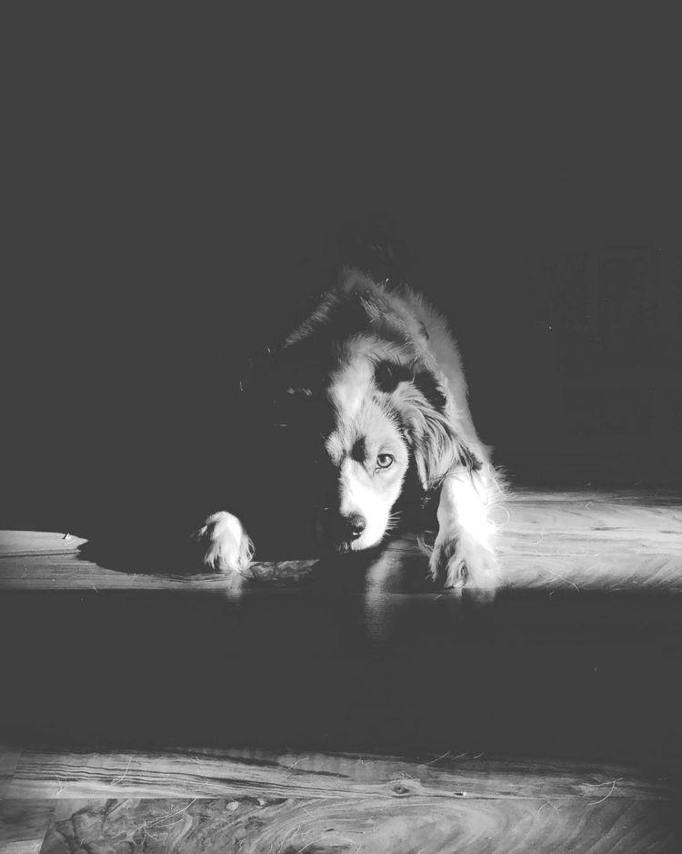 dog, notimpressed - nikonredneck | ello