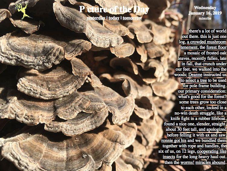 mushrooms, miracles, mycology - zverina | ello