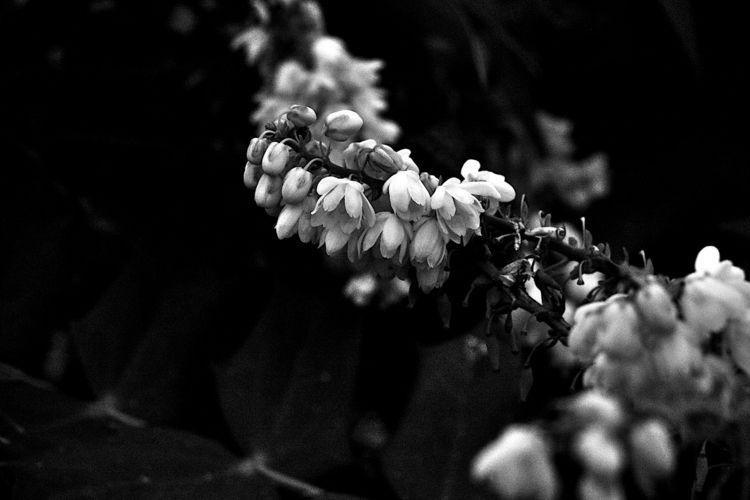 Botanical Monochrome 5994 - flowerphotography - dorian-stretton | ello