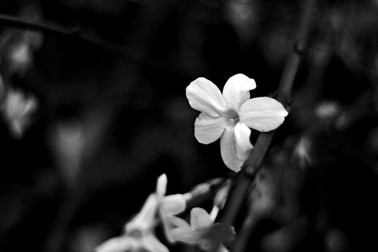 Botanical Monochrome 6000 - flowerphotography - dorian-stretton | ello
