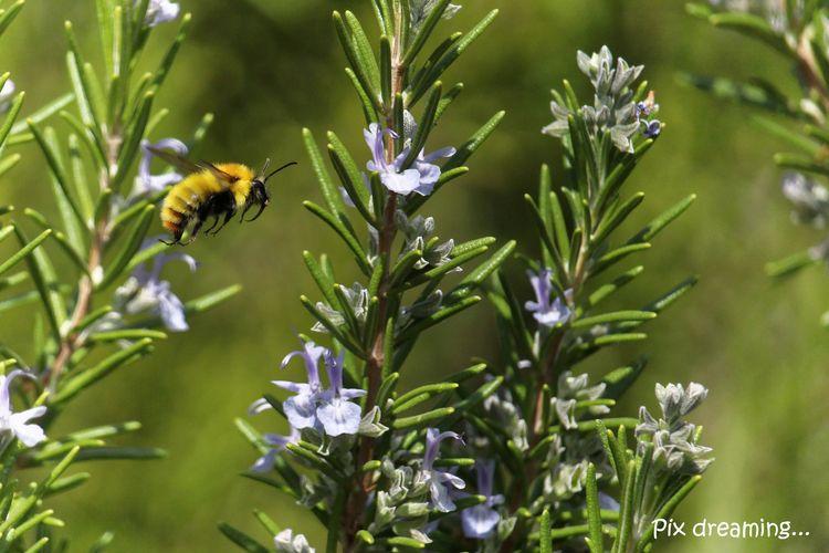 photography, macro, insect, bee - pixdreaming   ello