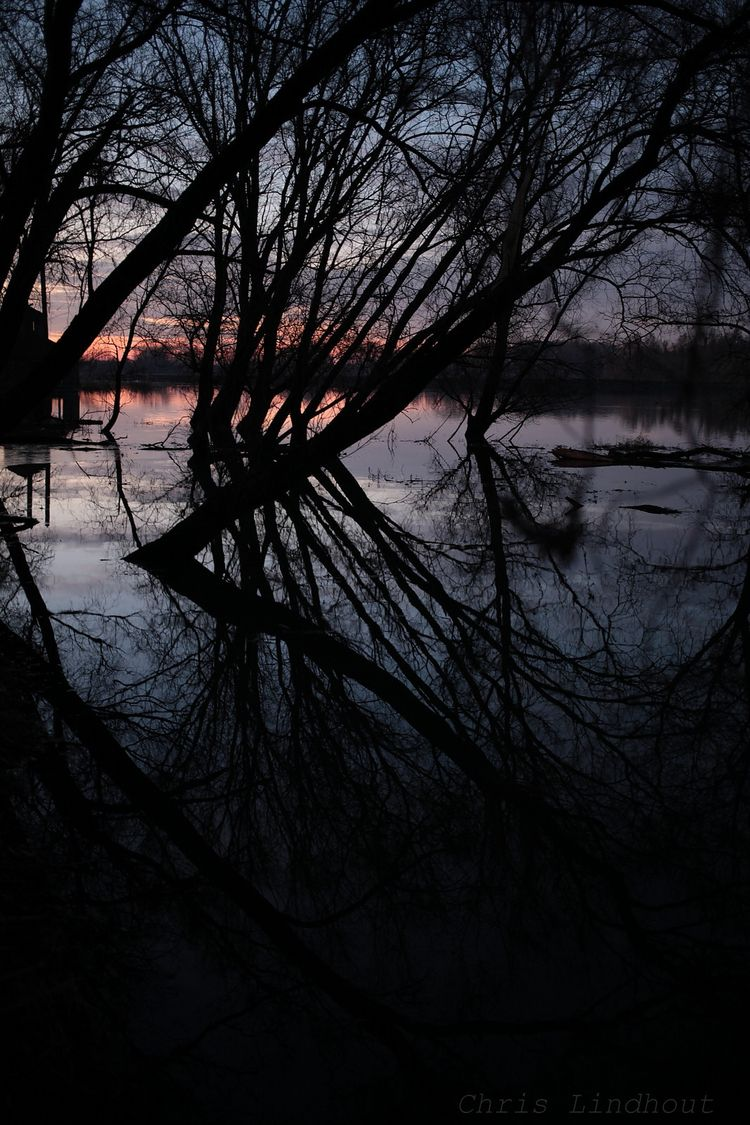 Dutch waterworld - landscape, trees - chrislindhout | ello