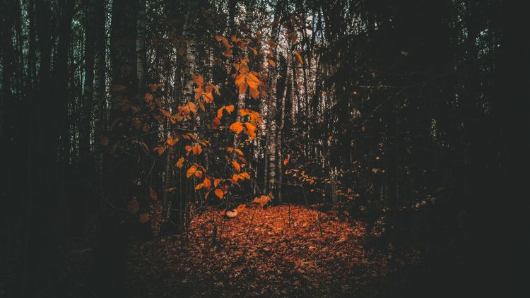 forest, lithuania, october, landscape - beheroght | ello