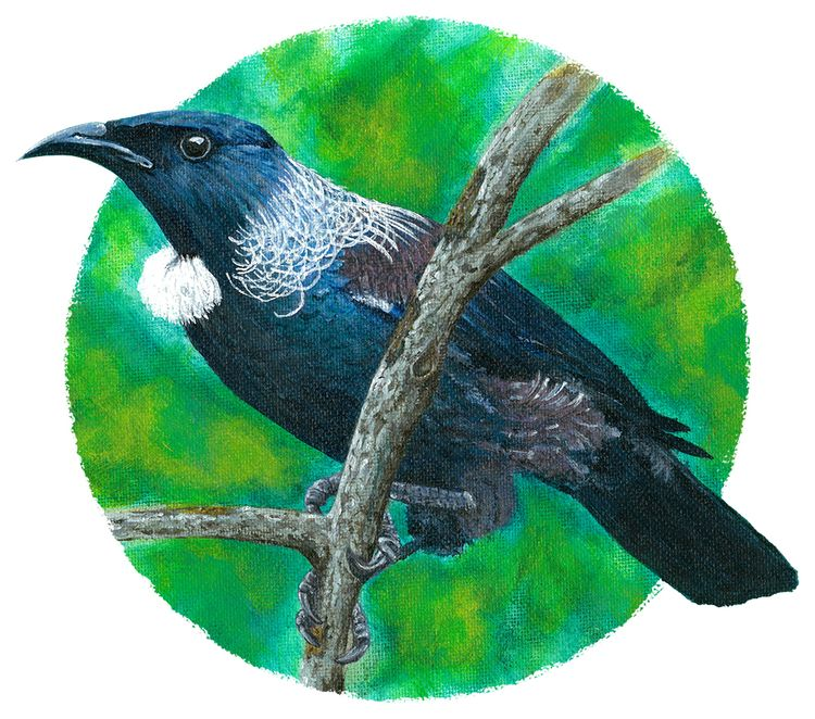 Zealand Tui, Acrylic Painting t - sean-fleming | ello