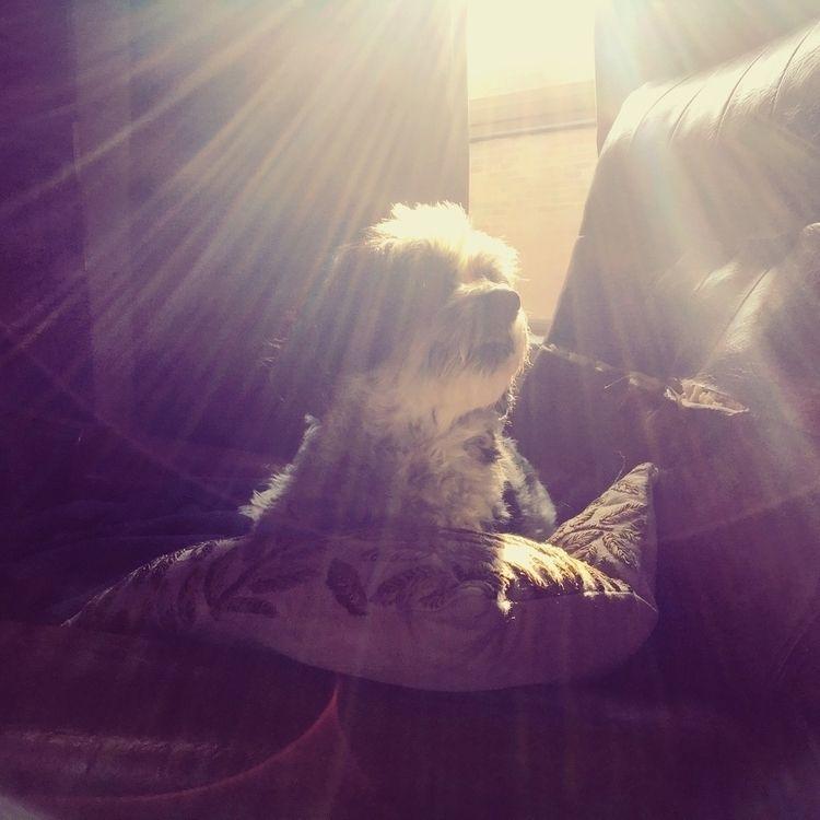 find bit sunshine - dog, light, sunlight - winstonstilwell | ello