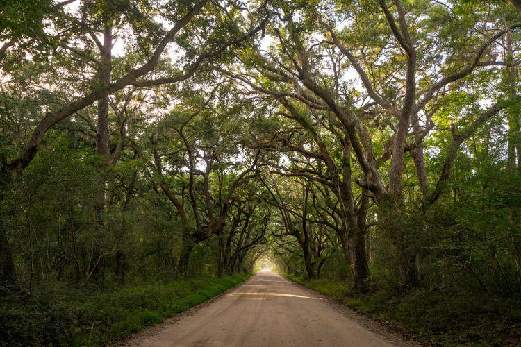 Edisto Canopy part road leading - jeffmoreau | ello