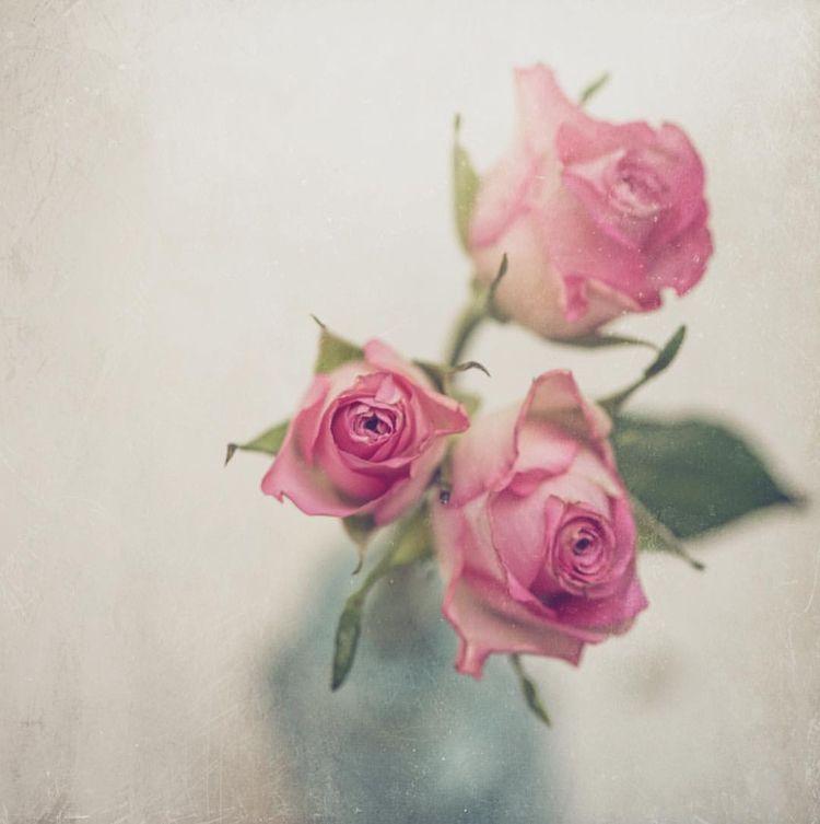 Beautiful Flower Plant Photogra - photogrist | ello