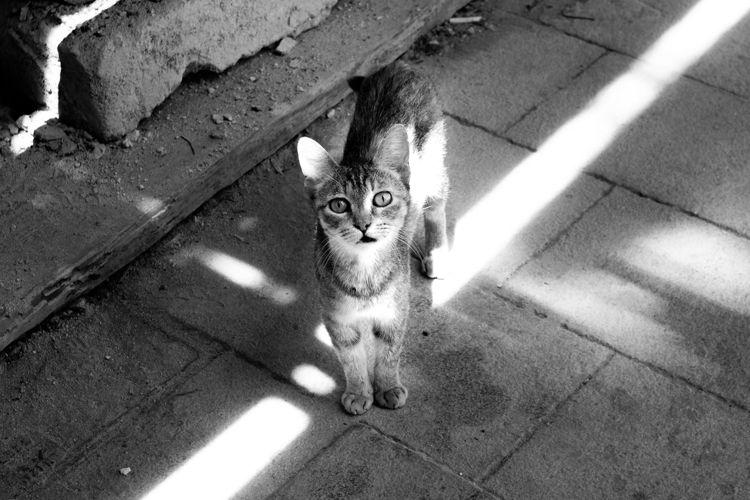 Cat Alleys Ortigia - blackandwhite - chytry | ello