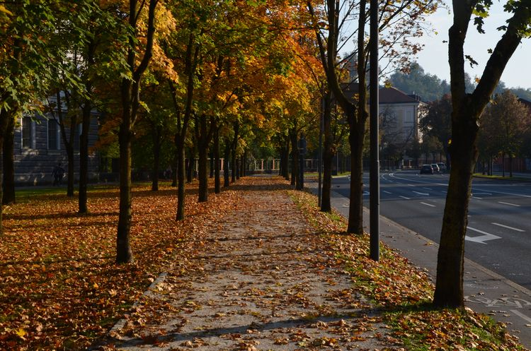 jesen, autumn, drevored, drevo - luxxi | ello