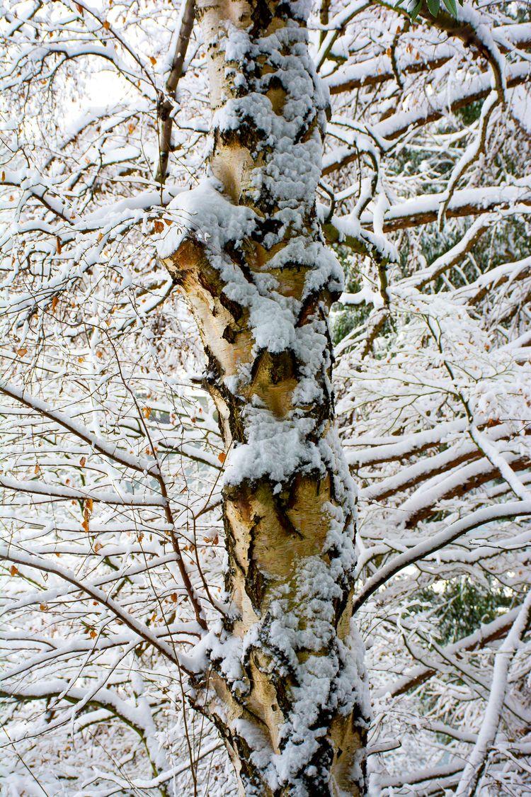 Locks - snow, nature, ellophotography - usnrmustang | ello