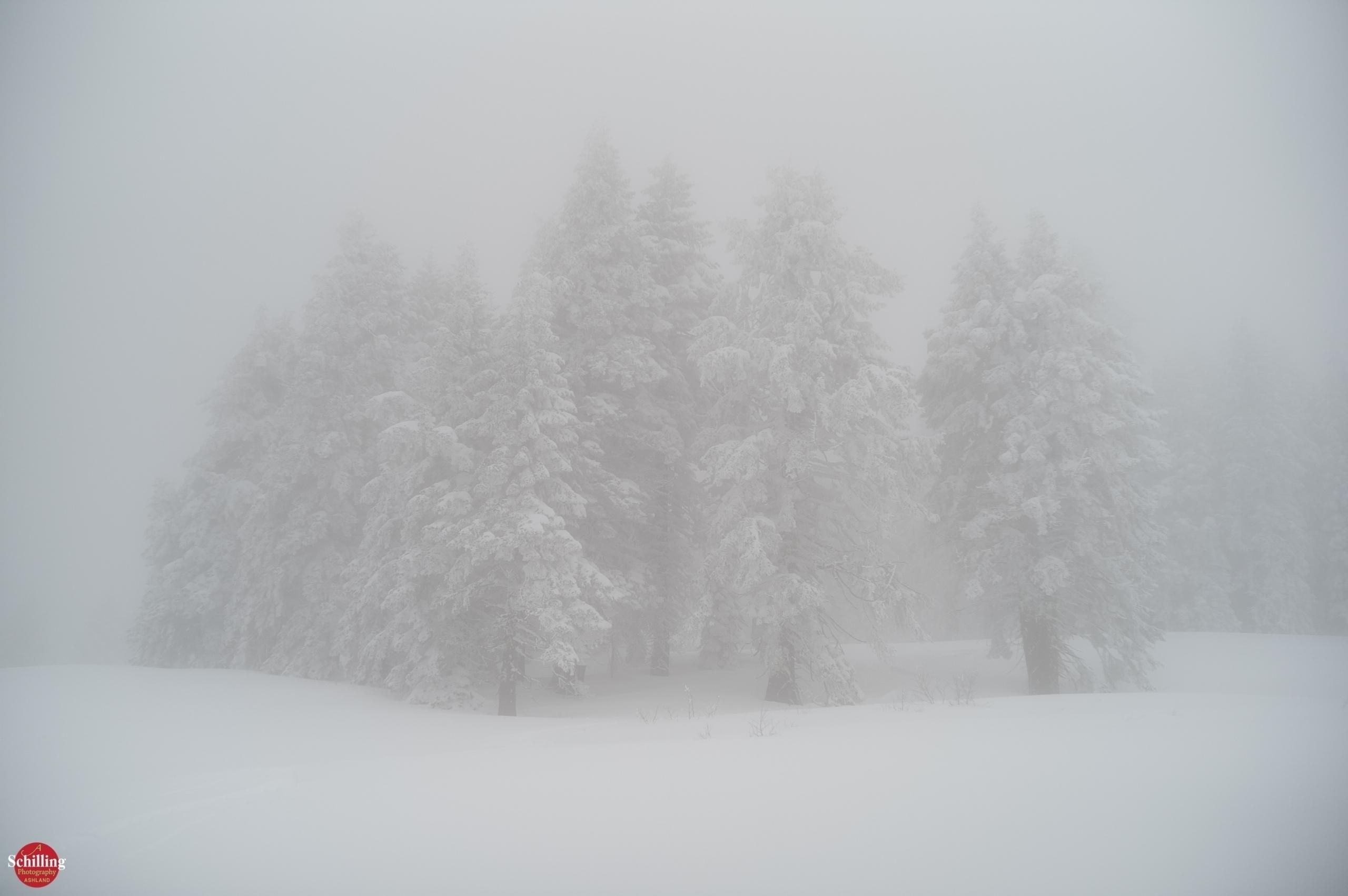 Atmospheric Impression; Snow Fo - augustschilling | ello